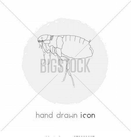 Louse Icon Line Element. Vector Illustration Of Louse Icon Line Isolated On Clean Background For You