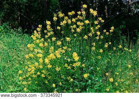 A Beautiful Flower Plant In The Forrest