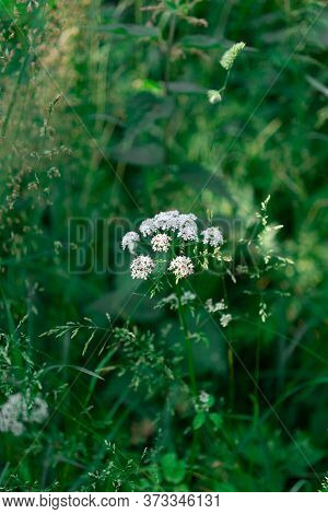 A Beautiful White Flower In The Forrest