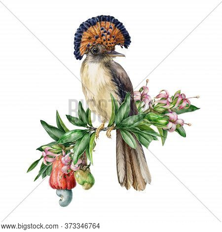 Watercolor Illustration Of An Amazon Paradise Flycatcher Sitting On The Branch Of Cashew Nut Tree. H