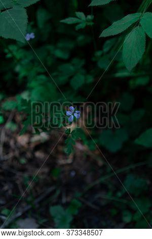 A Beautful Blue Flower In The Forrest