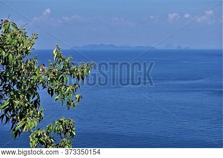 Panorama Of The Andaman Sea On A Sunny Day. In The Foreground Is A Bright Green Tree Branch. Backgro