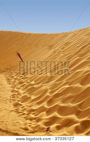 Dune of Sahara