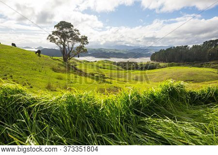 Beautiful rural  landscape of the New Zealand - green hills and trees