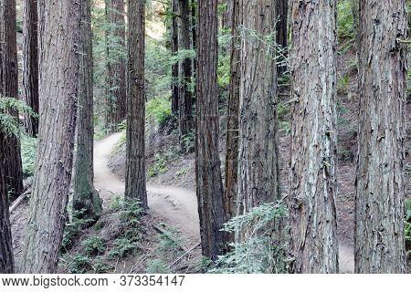 Trail Crossing Old Redwood Forest. Redwoods Regional Park, Oakland Hills, California.