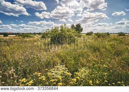 Landscape With A Meadow And Blue Sky With Clouds
