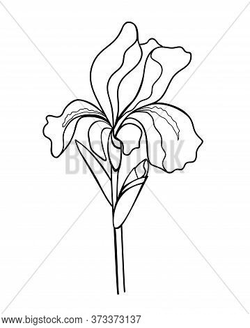 Iris Flower With A Bud, Stem And Leaf - Linear Vector Illustration For Coloring. Iris - A Garden Pla