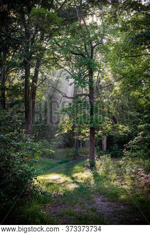 Sunlight Streams Through The Trees Early Morning In Freneau Woods Park In Matawan New Jersey