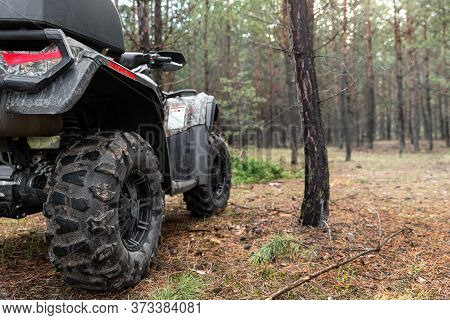 Atv Awd Quadbike Motorcycle Back Pov View Near Tree In Coniferous Pine Foggy Forest With Beautiful N