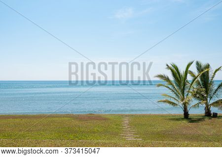 Two Young Coconut Trees On A Green Lawn By The Seashore Beside A Small Walkway To The Beach In Brigh