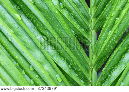 Water Droplets On A Leaf ,texture Of Droplets On Green Leaf.
