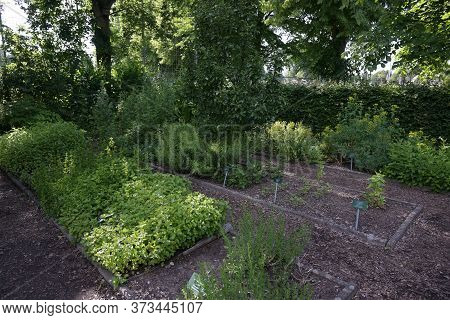 Luebeck, Germany, June 24, 2020: Organic Herb Beds Under Trees In A Public School Garden, Copy Space