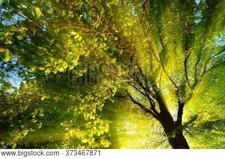 Majestic Rays Of Light Dramatically Illuminating The Branches And Foliage Of A Tree, With The Sun Be