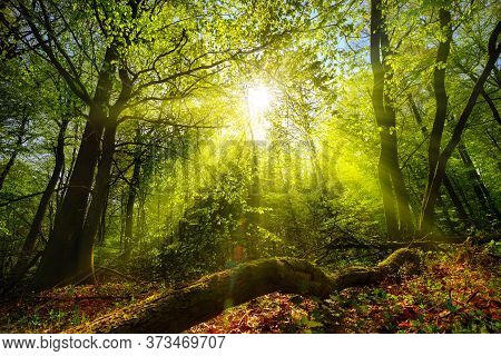 Dreamy Green Landscape Scenery: A Forest Clearing With The Sun Shining Through Green Foliage