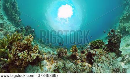 Underwater Fish Garden Reef. Reef Coral Scene. Seascape Under Water. Panglao, Bohol, Philippines.
