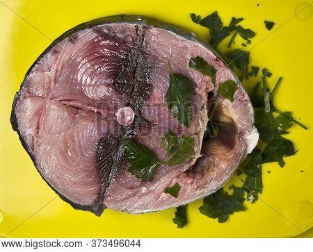 Piece Of Bonito Fish In The Cantabrian Sea
