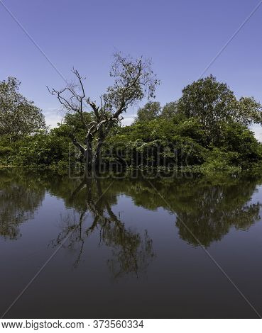 A Reflection Of A Dead Tree Among Lush Vegetation Near The Water In Australia's Northern Territories