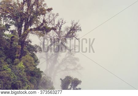 Serenity Cloud forest in Costa Rica