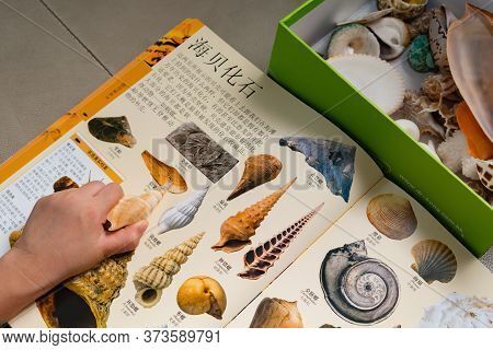 Zhongshan China-may 21 2017:kid Checking A Rimella Shell Against A Book With Details Of The Same Con