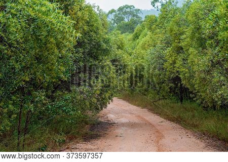 An Overgrown Dirt Bush Track With Trees Flourishing On Either Side Forming A Canopy In A Tropical Fo