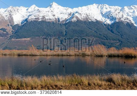 Winter Mountain Landscape With Lake And Snow-capped Mountains. Glenorchy Lagoon With Black Swans, Ne