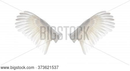 White Angel Wings Isolated On White Background. White Bird Spread Open Wings