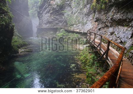 River in green forest in Canyon Vintgar, Triglav - Slovenia