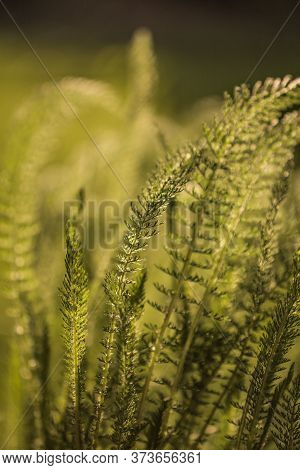 Morning Light Over Wildflowers.nature Background Close-up Flowers Field Nature Background Nature Bac