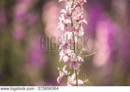 Wildflowers In A Meadow In The Hazy Summer Sunshine. Nature Background Close-up Flowers Field Nature
