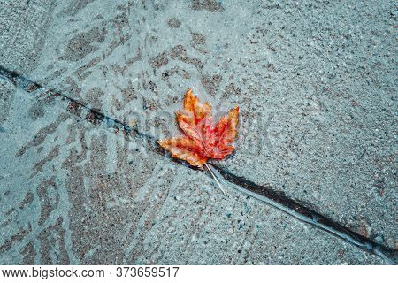 Beautiful Old Withered Red Yellow Autumn Maple Leaf In Puddle On Ground Under Rain. Fall Weather Sea