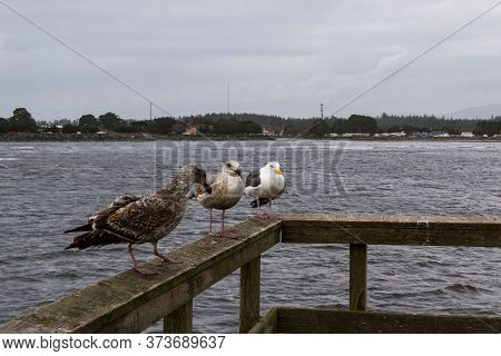 Seagulls At The Coast