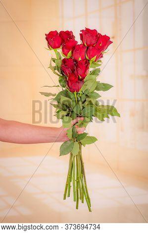 Women Hand Holding A Bouquet Of Hot Spot Roses Variety, Studio Shot.