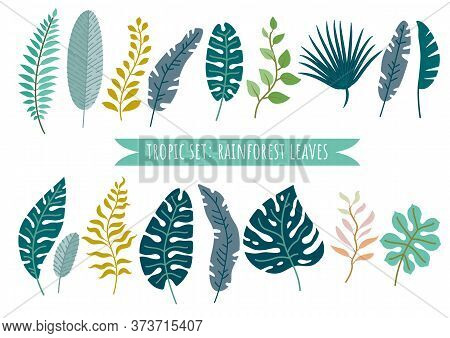 Set Of Tropical Leaves. Vector Rainforest Leaves