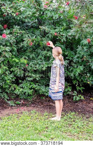 Townsville, Queensland, Australia - June 2020: Young Blond Girl Reaches For A Red Bottle Brush Flowe