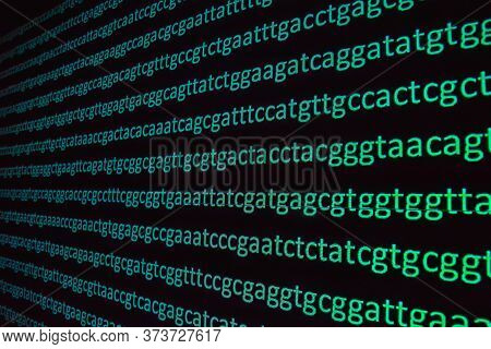 Genome Sequencing. The Sequence Of Nucleotide Bases In A Dna Molecule.