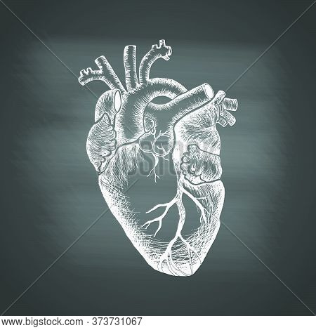 Anatomical Human Heart - Chalk Drawing On The Blackboard. Hand Drawn Sketch In Vintage Engraving Sty