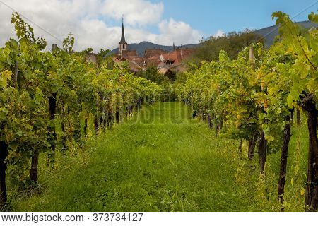 Wine village and vineyards in the Alsace region in France