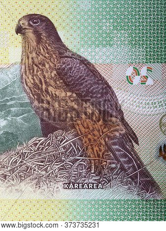 New Zealand Falcon A Portrait From New Zealand Dollar