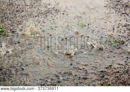 Rain Splattering And Muddy Ground During A Rainstorm