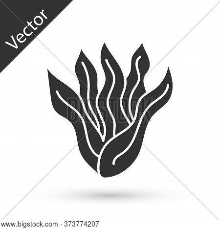 Grey Seaweed Icon Isolated On White Background. Underwater Seaweed Spirulina, Aquatic Marine Algae P