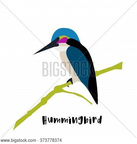 Flat Vector Icon Of Sitting Hummingbird. Colibri With Colorful Feathers And Long Thin Beak. Wildlife