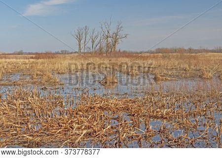 Wetland In The Tallgrass Prairie In Midewin National Tallgrass Prairie In Illinois