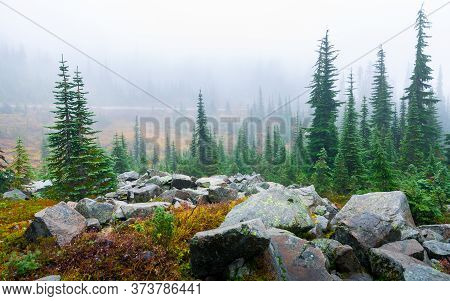 Pine Trees And Big Rocks In Natural Parkland Covered By Mist And Fog During Winter Season.