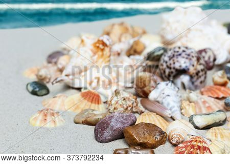Seashells, Sea Stars, Coral And Stones On The Sand, Summer Beach Sea Background Travel Concept.