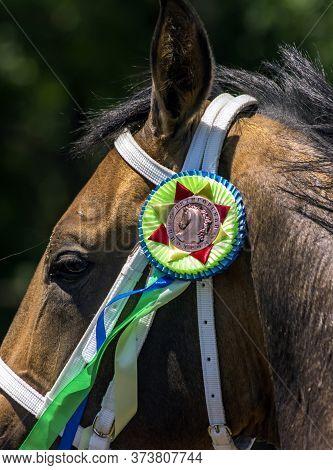 Pyatigorsk,russia - June 28,2020:sprint Prize Winner -  Akhal-teke Stallion Jasil On Pyatigorsk Hipp