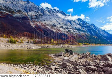 Huge black bear is resting on the rocky shore of the mountain lake of Medicine. Canada, Alberta, Jasper. Great autumn day. The concept of active, environmental and photo tourism
