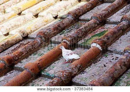 White bird on tiled roof