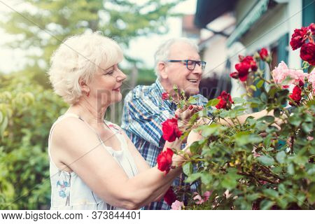 Cheerful senior man and woman cutting the garden roses in front of their house