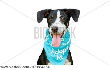 A Rescue Dog Shelter Animal Is Advertising For Adoption Isolated On A White Background