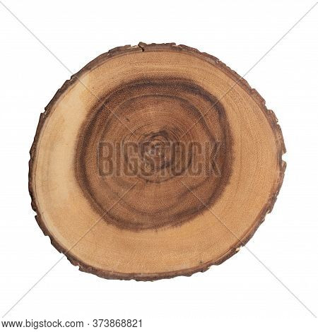 Cross Cut Section Of Tree Stump On White Table Flat Lay Top View. Decorative Stock Bohemian Element